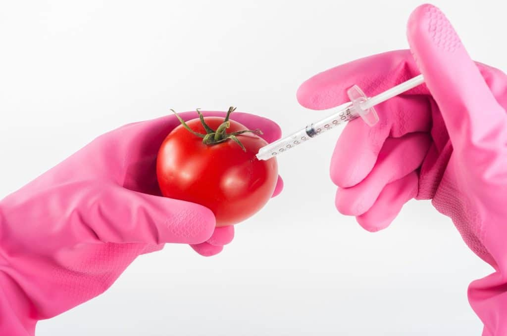A pair of pink gloved hands injecting a tomato using a syringe