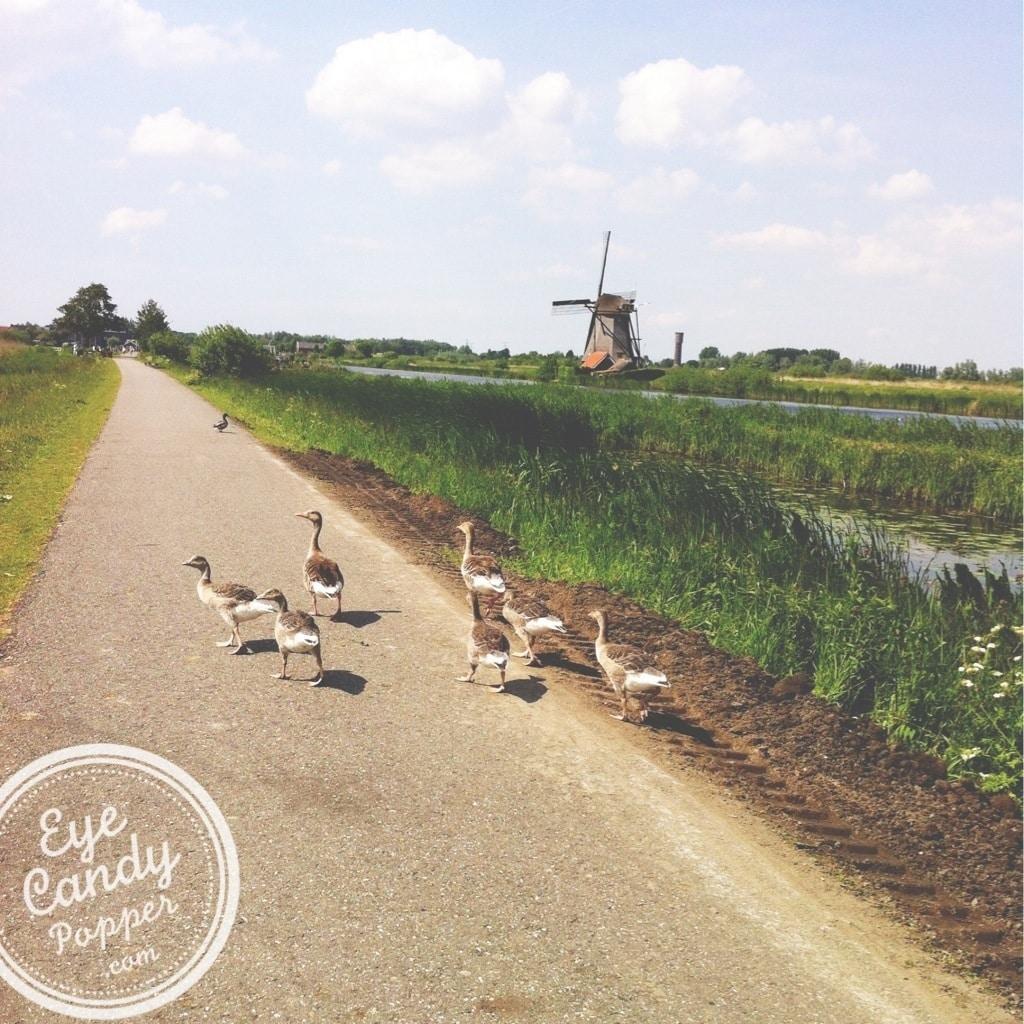 birds in Holland