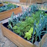 a small vegetable garden in a wood box